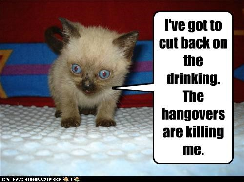 I've got to cut back on the drinking. The hangovers are killing me.