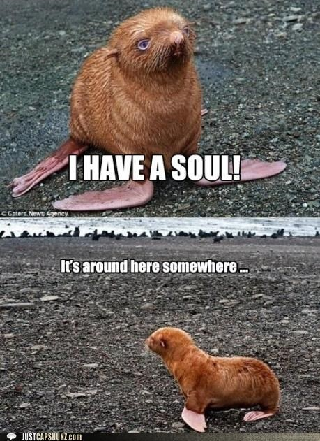 animals,cute,ginger,gingers,I Can Has Cheezburger,seals,souls