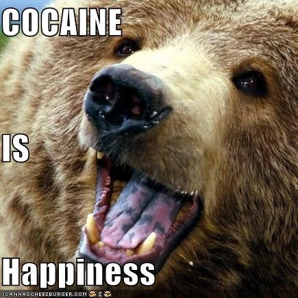 animals,bears,cocaine,drugs,happiness,happy,I Can Has Cheezburger,wtf