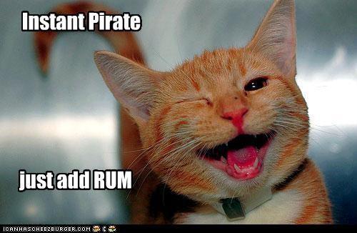 cat funny I Can Has Cheezburger - 5220677376