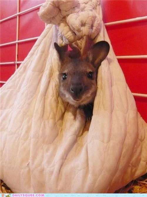 baby,good enough,happy,Joey,makeshift,pouch,pragmatic,squee spree,wallaby
