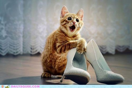 acting like animals cat enamored happy heels high heels love must have pun puns shoes SO MANY PUNS spendy tabby - 5220805376