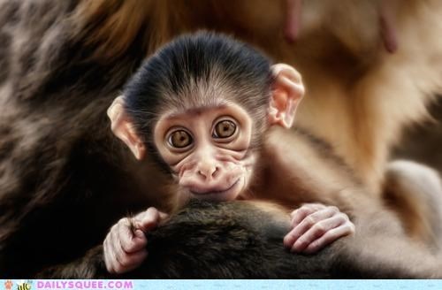 baby expression Hall of Fame monkey shy smile smiling squee-inducing timid warm welcoming - 5220817664