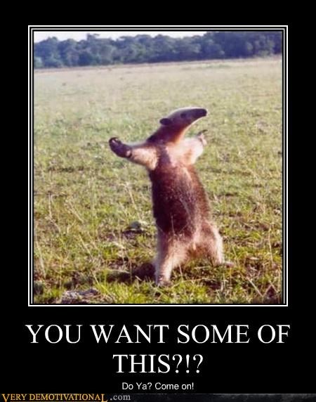 anteater,come at me,hilarious,wtf