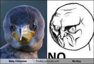 baby cormoran,bird,cormoran,meme,meme face,meme faces,no