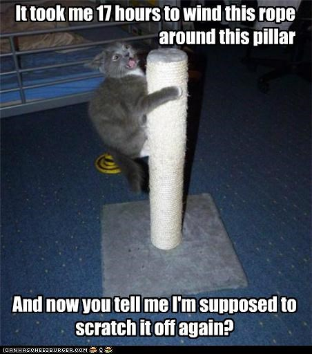 17 around caption captioned cat do not want hours instructions pillar realization rope scratch scratching post time took wind