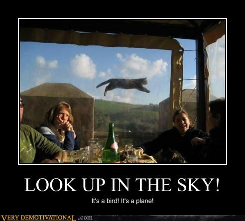 LOOK UP IN THE SKY! It's a bird! It's a plane!