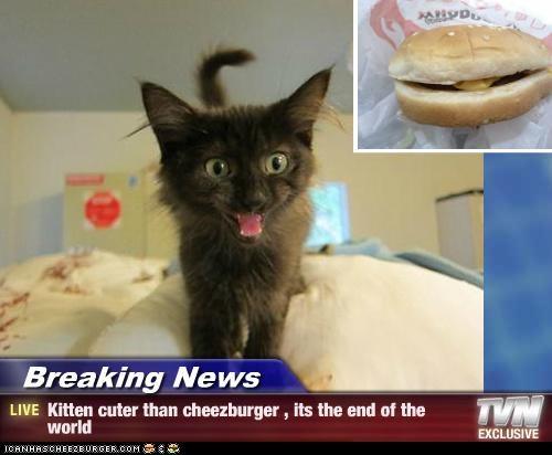 Cheezburger Image 5221876480