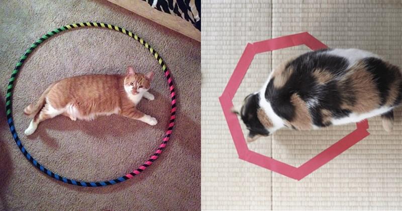 gatos encerrados en circulos