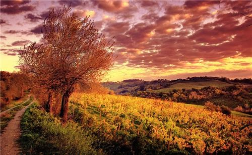 clouds,europe,getaways,green,Hall of Fame,Italy,orange,red,trees,tuscany,vineyard,vivid colors,yellow