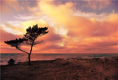clouds,coast,coastline,europe,getaways,latvia,orange,sun,tan,tree