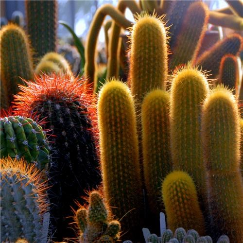 cacti cactus cactuses flora getaways green pink sun sunshine unknown location - 5223265280