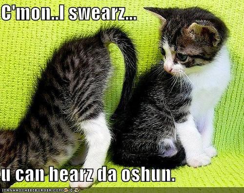 butts kitten lolcats lolkitthehs ocean - 522338560