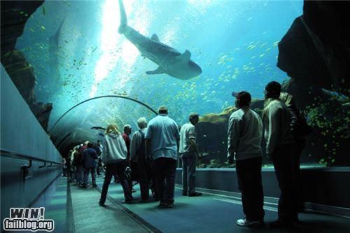 aquarium fish photography pretty shark tunnel zoo - 5223730176