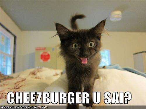 Cheezburger Image 5224216320