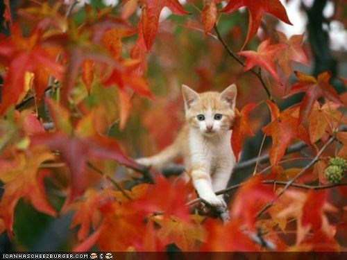 autumn cyoot kitteh of teh day fall leaves nature outdoors seasons trees - 5224254976