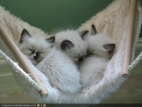cyoot kitteh of teh day,Fluffy,hammock,hanging,hanging out,sleeping