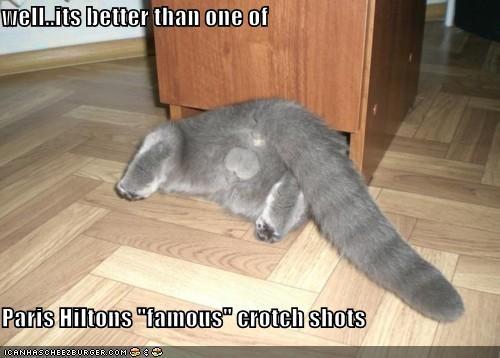 animals balls Cats famous I Can Has Cheezburger paris hilton - 5224451328