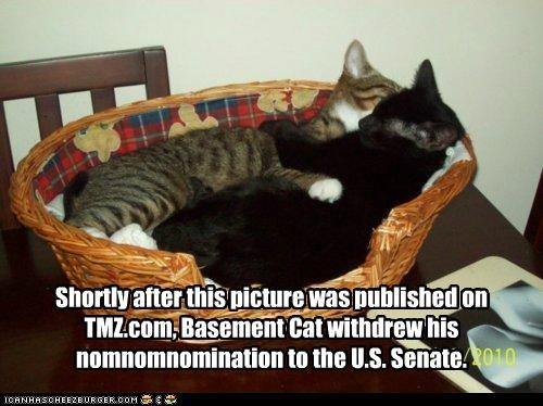 after basement cat caption captioned cat Cats evidence incriminating nomination picture published scandal senate shortly TMZ u-s withdrew