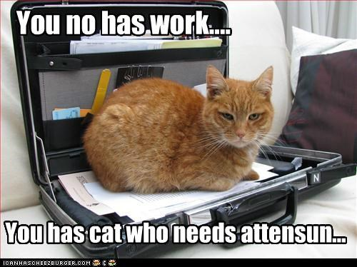 You no has work.... You has cat who needs attensun...