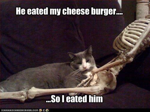 Cheezburger Image 5224961280