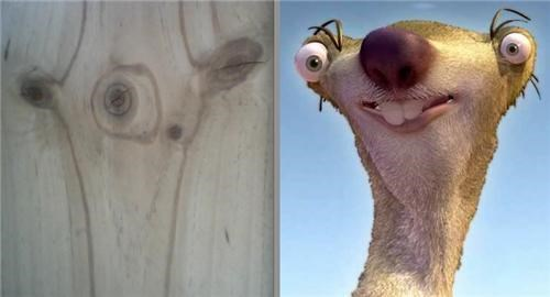 piece of wood totally looks like sid the sloth