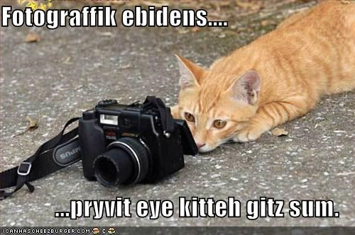 acquiring camera caption captioned cat evidence eye Photo photographic photos private private eye shooting tabby - 5225204480