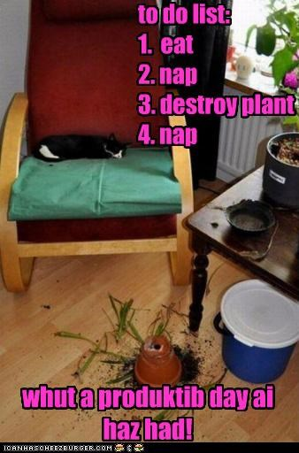 to do list: 1. eat 2. nap 3. destroy plant 4. nap whut a produktib day ai haz had!