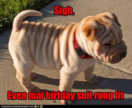 birthday suit depressed doesnt-fit Sad shar pei sigh wrinkle wrinkled wrong wrong fit