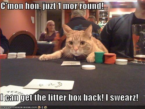 desperation gambling lolcats orange poker - 522652928
