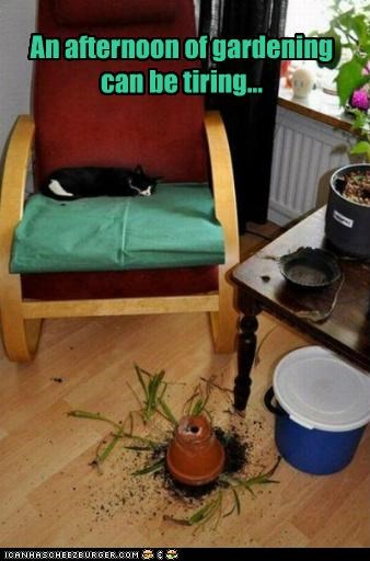 afternoon can caption captioned cat gardening mess possibility sleeping tired tiring - 5226833408