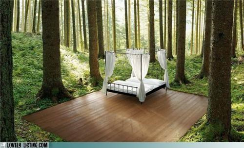 bed,best of the week,outdoors,woods