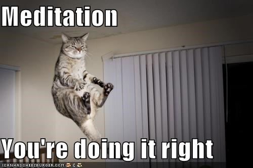 caption captioned cat doing it right floating Hall of Fame levitating levitation meditating meditation - 5227318016