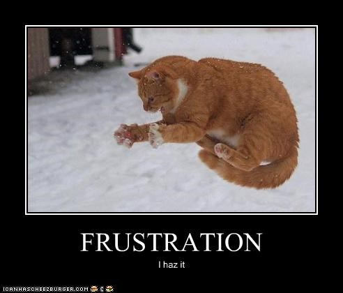 angry animals Cats frustrated frustration I Can Has Cheezburger jumping snow - 5227495936