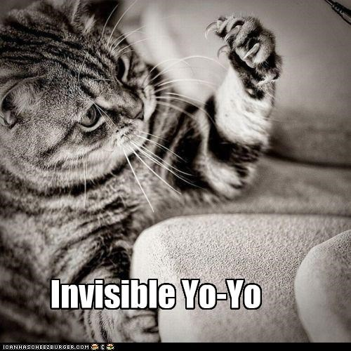 animals,Cats,claws,I Can Has Cheezburger,invisible,yo yo