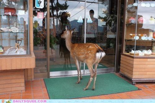 acting like animals buildup deer do want jasmine joke lead up not a joke punchline relaxing serious tea thirsty - 5227857152