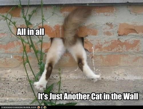 all all in all another best of the week brick caption captioned cat Hall of Fame just lyric pink floyd song wall - 5228668672
