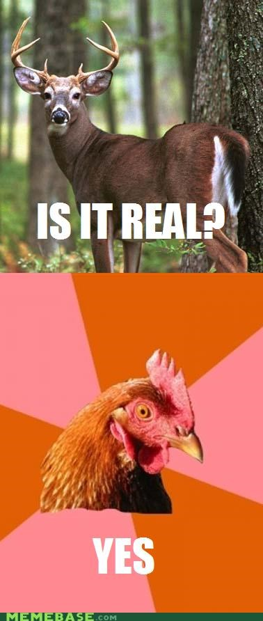 anti joke chicken,Chuck Testa,deer,nope,real