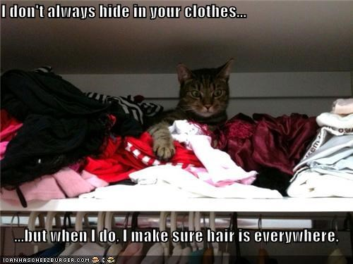 I don't always hide in your clothes...  ...but when I do, I make sure hair is everywhere.