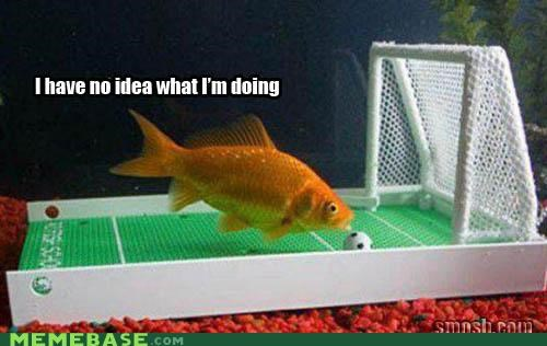 doing,goldfish,lol,Memes,soccer,sports,water,what