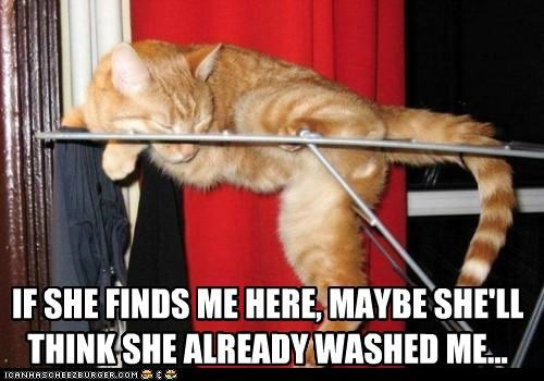 already,caption,captioned,cat,clothes line,drying,finds,here,human,if,maybe,me,sleeping,tabby,think,washed