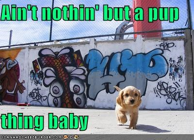 Ain't nothin' but a pup thing baby