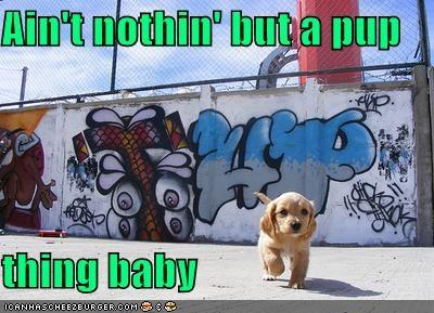 gangsta gangster hip hop labrador retriever puppy - 5229250304