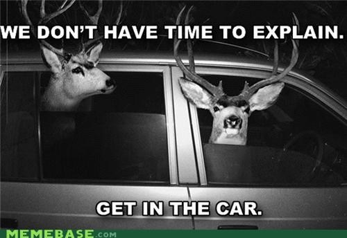 car,deer,explain,get in,nope,urgent
