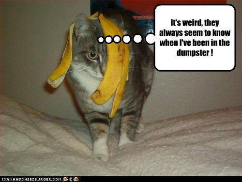 always,banana,banana peel,caption,captioned,cat,dumpster,evidence,guilty,know,mess,peel,seem,trash,weird