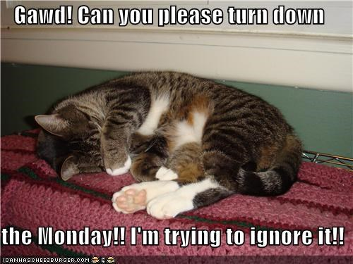caption captioned cat do not want down Hall of Fame ignore monday please request trying turn - 5229555712