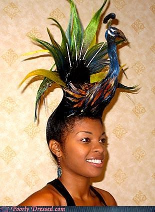 bird feathers hat peacock