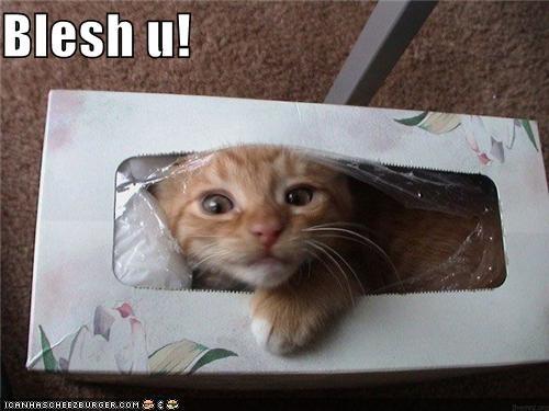 allergies bless you cat gesundheit I Can Has Cheezburger kleenex sneeze tissue box tissues - 5229573120