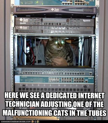 adjusting,caption,captioned,cat,Cats,computer,computers,dedicated,internet,malfunctioning,technician,tubes