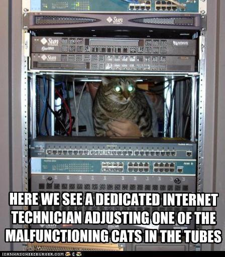 adjusting caption captioned cat Cats computer computers internet technician tubes - 5229723904